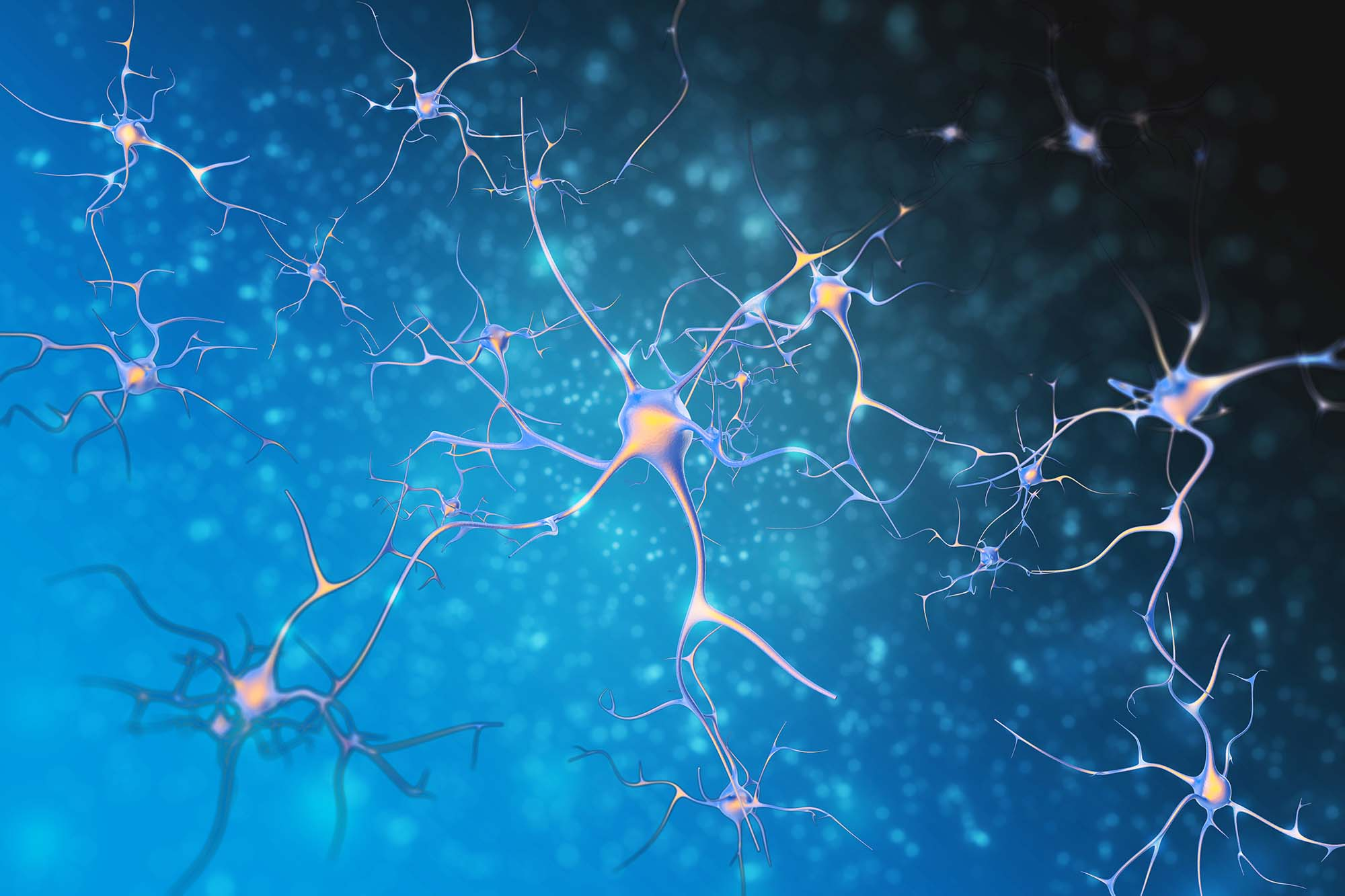 neurons of nervous system